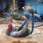 Mime Vs. Lemur