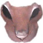 Puma - Buckram