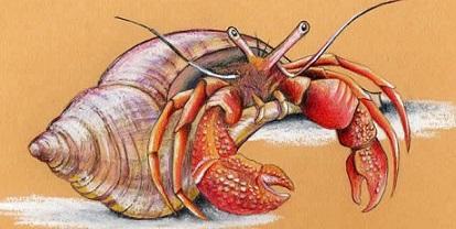 Hermit Crab Art